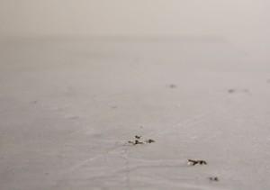 """""""Appunti"""", 2014, legno, gesso, bolo, pigmento, argento, punzonature realizzate con un cacciavite a stella photo:Ornaghi&Prestinari"""